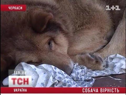 Пес ждет своего хозяина 5 лет подряд