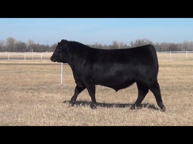 Express Ranches Lot 9