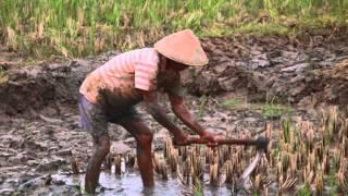 CANGKUL- CANGKUL --LAGU ANAK INDONESIA