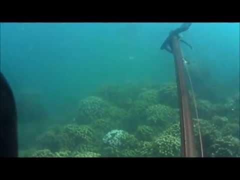 Chasse sous marine en Afrique du Sud