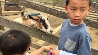 Tilden Little Farm (bonus footage)