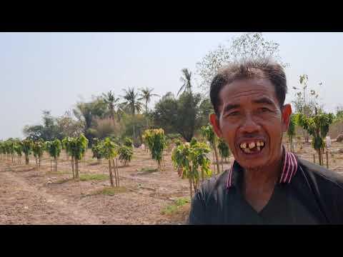 โกโก้พืชเศรษฐกิจใหม่