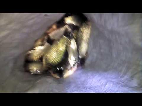 Необычная Рыбалка Незаконные Промыслы Рыбалка на Телевизор Косынку