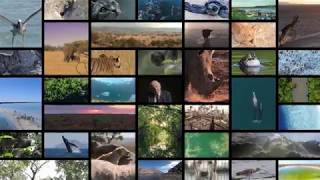 Sir David Attenborough introduces Lion's Share, an initiative to support animal welfare