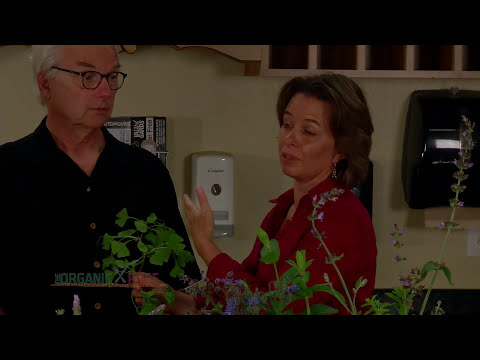 The Organic Rose S1 EP106 Herbs and Acupuncture Part 2