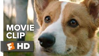 A Dog's Purpose Movie CLIP - Chase A Ball (2017) - Josh Gad Movie