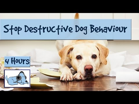 Stop Destructive Dog Behaviour with Relaxation Dog Music! Leave Your Dog at Home Without the Worry