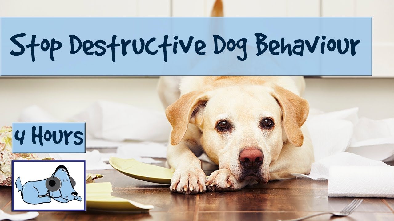 picture How to Stop Destructive Behavior in Dogs