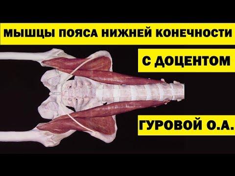Мышцы пояса нижней конечности | Анатомия человека [4K]✅