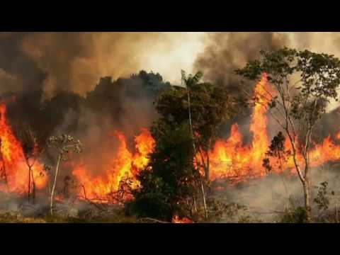 ???? ????INCENDIO EN EL AMAZONAS BRASILEÑA / FIRE IN THE BRAZILIAN AMAZON