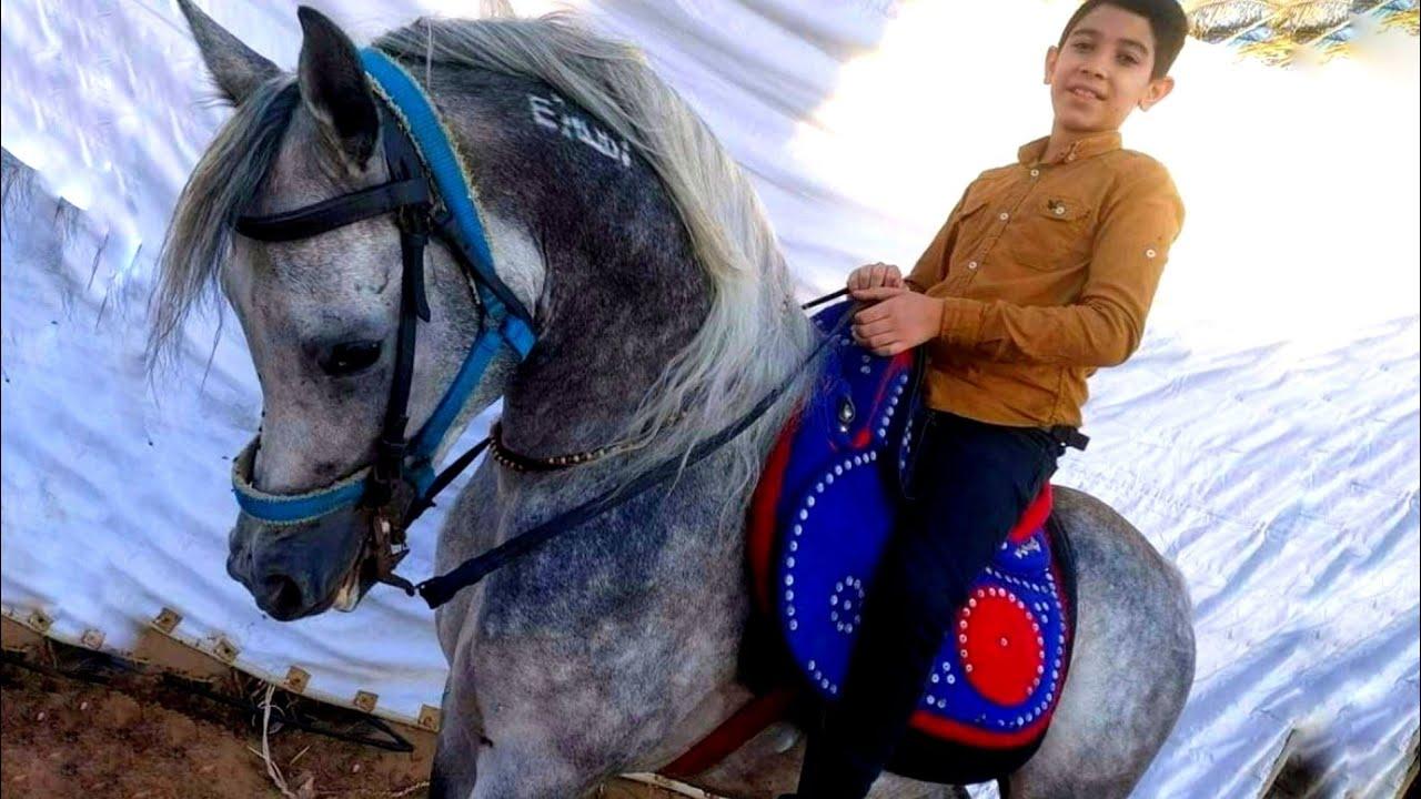 حصان عربي اصيل مختوم بيلعب اخر شبع واخر جمال دمه حامي