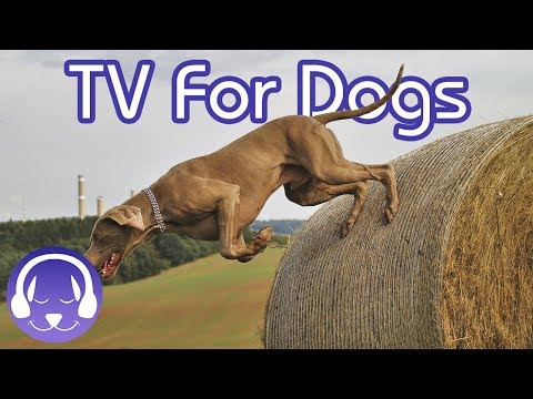 NEW Relaxing Dog Music Playlist & TV for Anxious, Stressed or Aggressive Dogs!