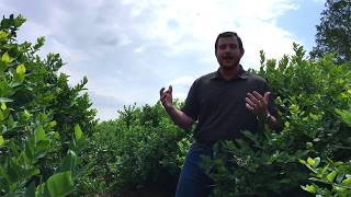 Functional Soil Carbon