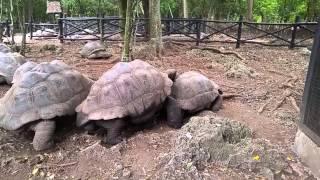 Неудачный секс черепах