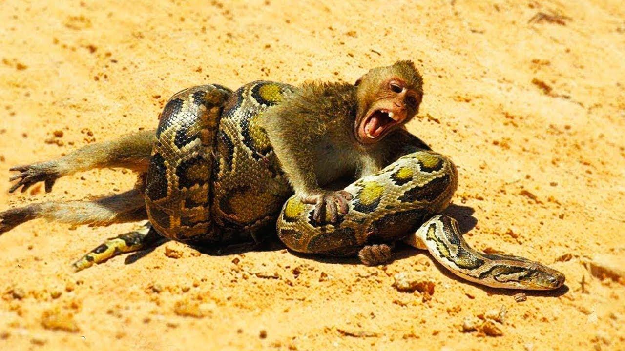 15 Most Dangerous Animals In Australia