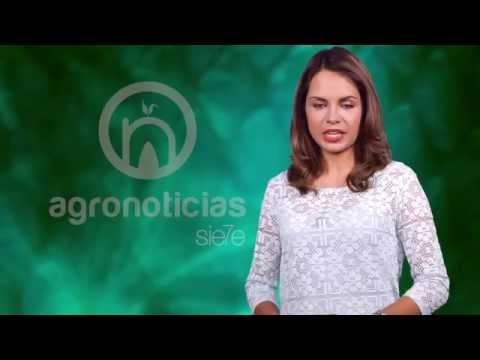 AGRONOTICIAS sie7e PROGRAMA 12