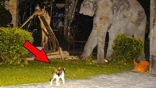 От того, что сделал этот котенок со слоном, у очевидцев волосы встали дыбом