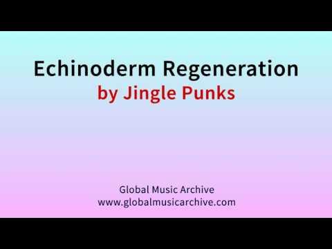 Echinoderm regeneration by Jingle Punks 1 HOUR
