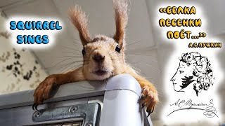 Белка поёт...! 😊 The squirrel sings