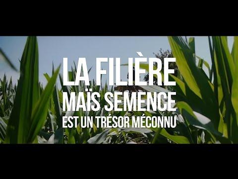 La filière maïs semence est un trésor méconnu