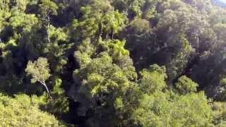 Perspectiva - Selva Paranaense, Monte Seguín, Puerto Rico, Misiones