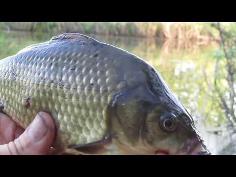 Рыбалка Подводные съёмки Алтайский край Видео