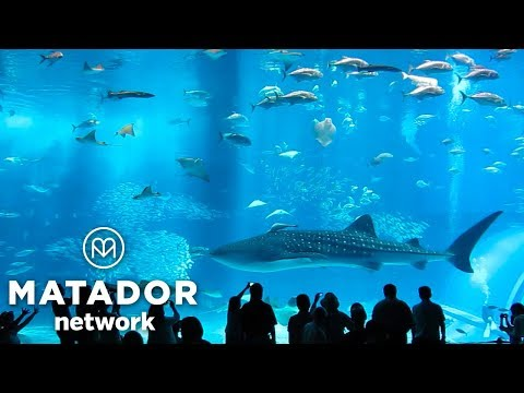 Magic Spot: Okinawa's Churaumi Aquarium