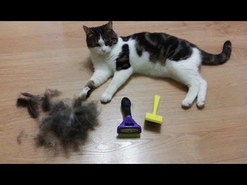 Котик Лаваш. Чем вычесывать кота Фурминатор Furminator