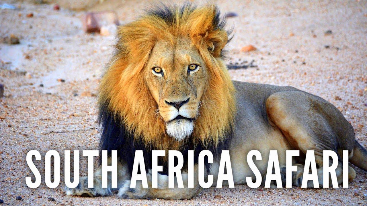 ON SAFARI IN KRUGER NATIONAL PARK, SOUTH AFRICA