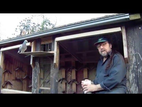 Einfachste Pigeon/Taubenhaltung Ohne Schnick Schnack