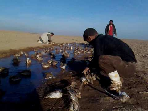 صيد الكط في تلعفر 2013  الصياد جاسم محمد فارس
