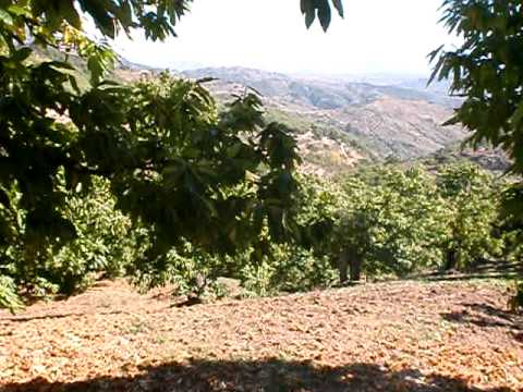 An old property for sale in Yunquera with natural springs, Andalucia, Spain, Ref 1082