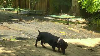 Outside Dog Yard Cam 06-11-2018 09:39:13 - 10:26:33