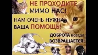Студенческий совет ЛПГК выступают в защиту бездомных животных
