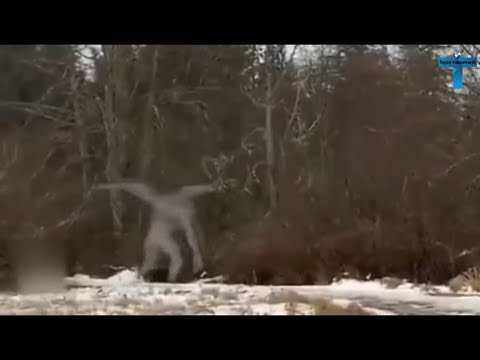 Top 10 Mysterious & Strange Creatures Caught On Camera