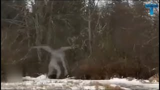 Top 10 Mysterious & Strange Creatures Caught On Camera - Unbelievable Findings