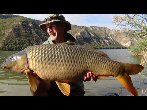 The River Ebro 2016 - Carp Fishing