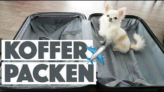 KOFFER PACKEN + HANDGEPÄCK & TASCHE FÜR CHIHUAHUA TINKERBELL | Was packe ich in meinen Koffer?
