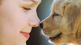 Köpek Beslemek İçin 8 Önemli Sebep