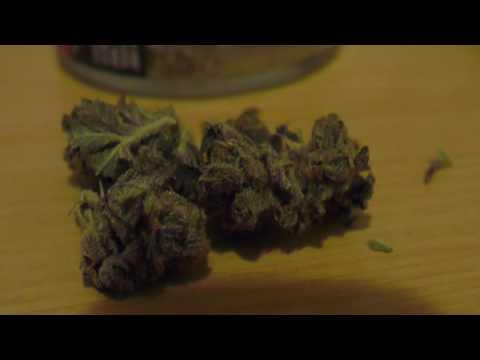 Washington State Budz and Extracts Recreational Cannabis
