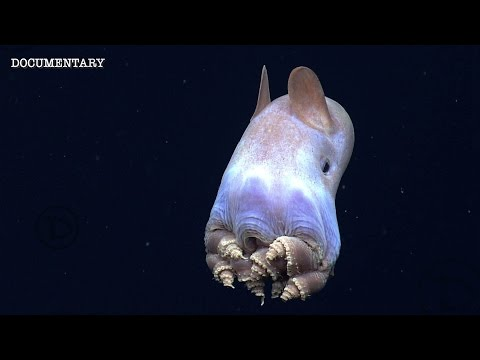 Mariana Trench | The Deepest & Most Unexplored Place On The