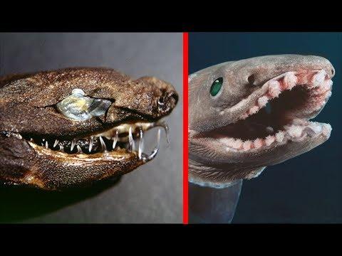 5 Weirdest Living Sharks