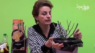 видео Саженцы, купленнные в марте, что с ними делать