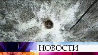 В городе Снежинск Челябинской области медведь впал в спячку рядом с местной котельной.