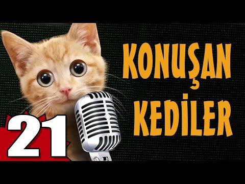Konuşan Kediler 21 - En Komik Kedi Videoları
