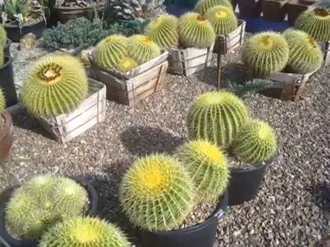B&B Cactus Farm in Tucson, AZ - YouTube