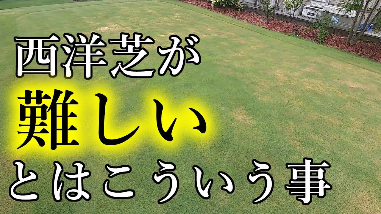 【夏越え失敗?】西洋芝が難しいとはこういう事【薬害】