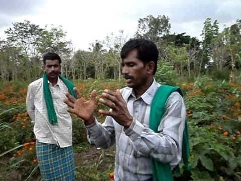 Good Agriculture Practices by Bannur Krishnappa, Mysore Dist, Karnataka