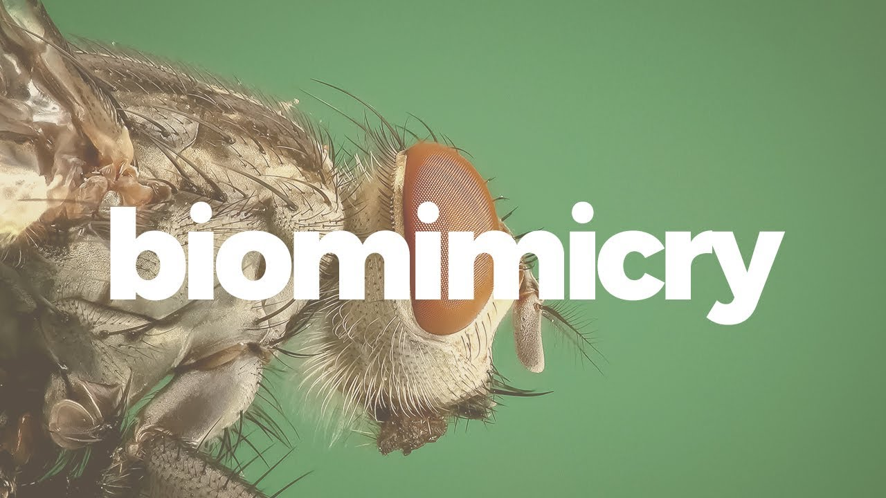 biomimicry is more than just good design