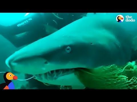 Scuba Diving Instructor Saves Shark Trapped In Fishing Net | The Dodo